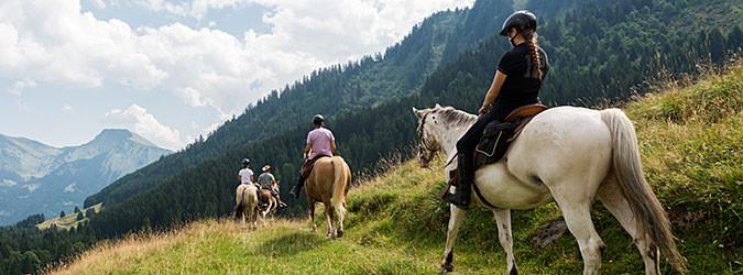 Pony and horses trekking