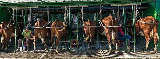 Découvrir la vie à la ferme