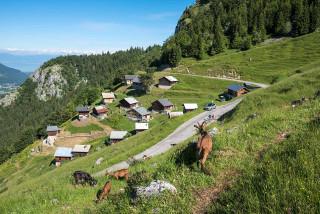 Alpage et belvédère de Tréchauffé