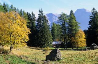 arbre-automne9-2765