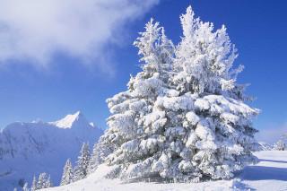 paysage-hiver8-3115
