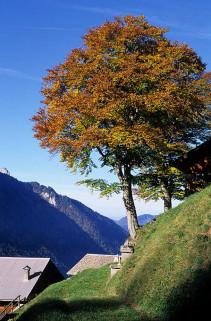 trechauffe-automne2-3048