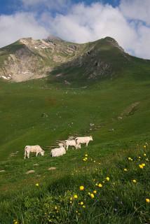 vaches-rocdenfer2-3050