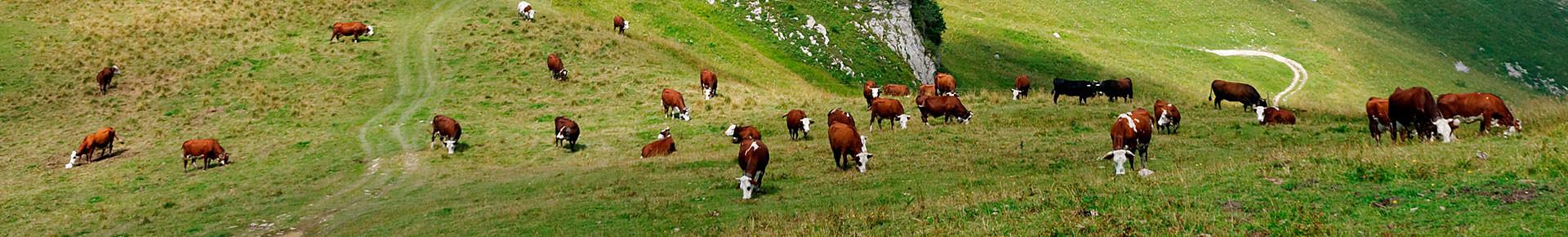 Alpage d'Ouzon, Le Biot