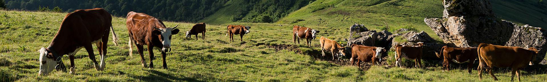 Alpage de l'Aup, La Côte d'Arbroz