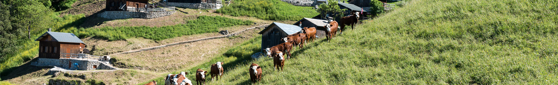 Alpage de Tréchauffé, La Forclaz, Géopark Chablais