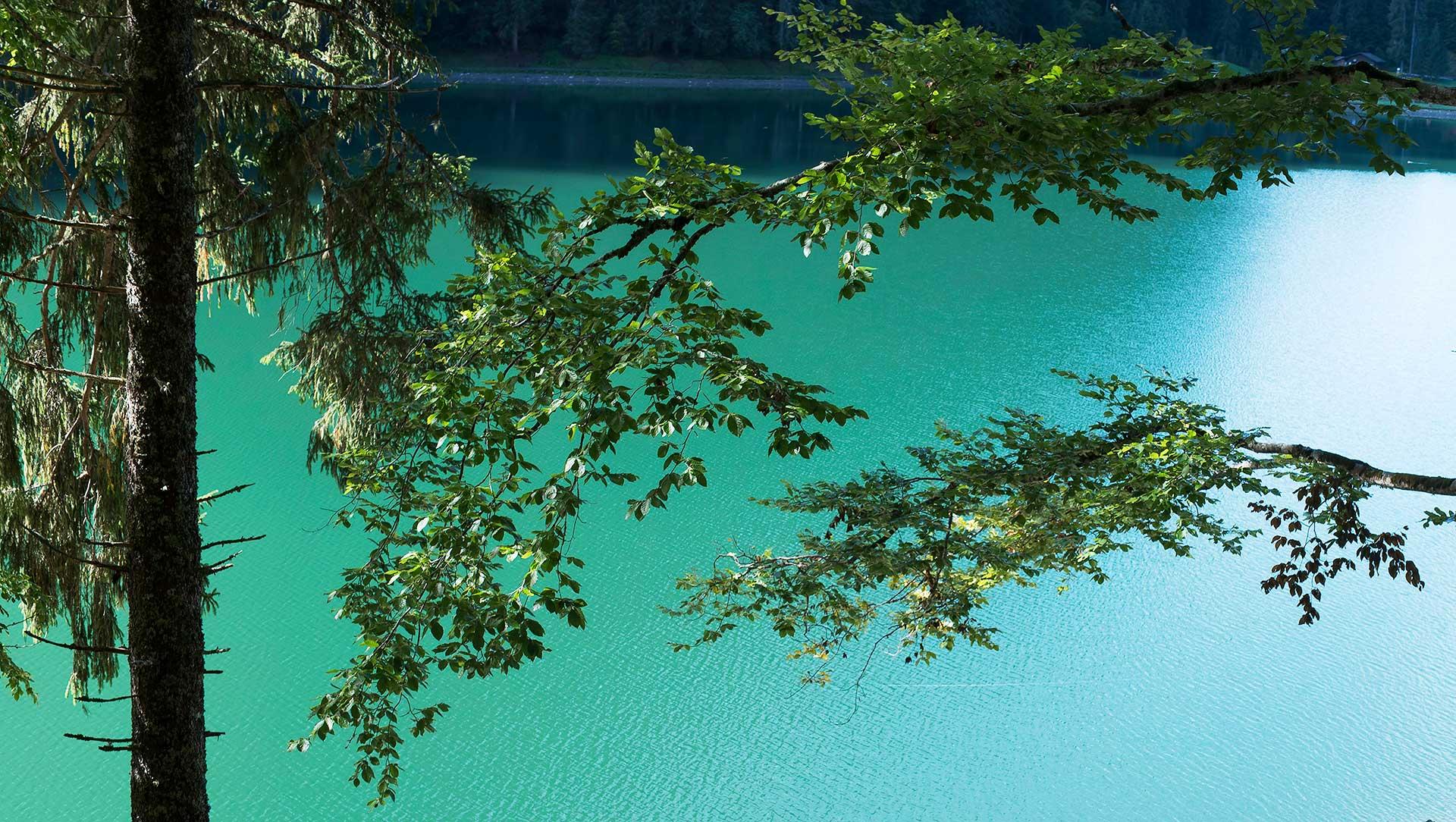 Lac de Montriond, le lac vert